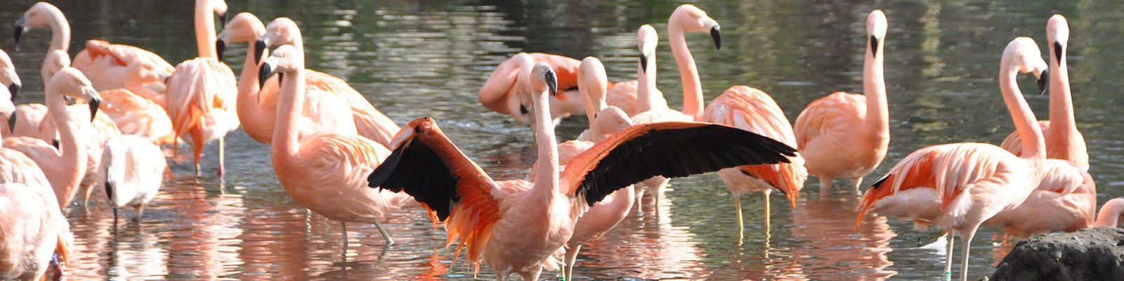 ANIMONDIAL - Bringing compassion to tourism
