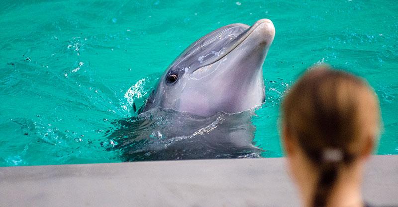 Captve Dolphin
