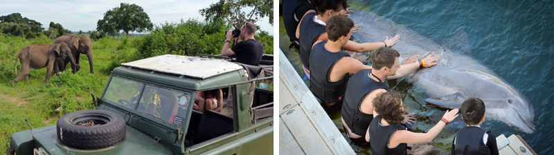Viewing Indian Elephants in the Wild (Photo: Daniel Turner) vs In-water interactive session with a bottlenose dolphin (Photo: Jo-Anne McArthur)