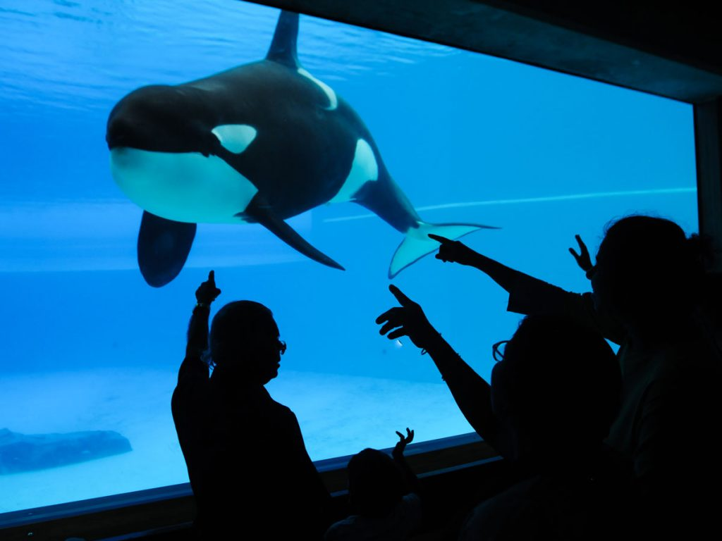 Captive Orca at Marineland, Canada (Photo: Jo-Anne McArthur: We Animals)