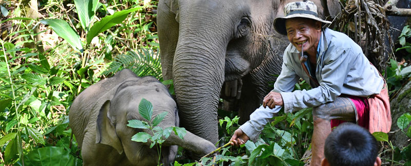 Photo: Mahouts Elephant Foundation