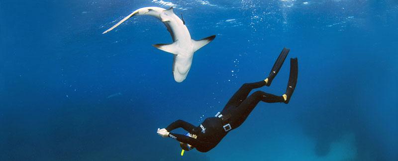 Photo: SharkSchool