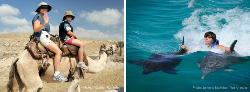 Camel riding (photo: heather Ramsden) and Dorsal fin pull with captive bottlenose dolphins (photo: Jo-Anne McArthur / We Animals)